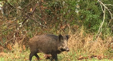 Blog jachtseizoen in de Limousin - Frankrijk